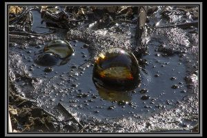 Bubbles in a tar pit (by: Russel Ray Photos)